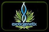 エキゾチックGENETIX