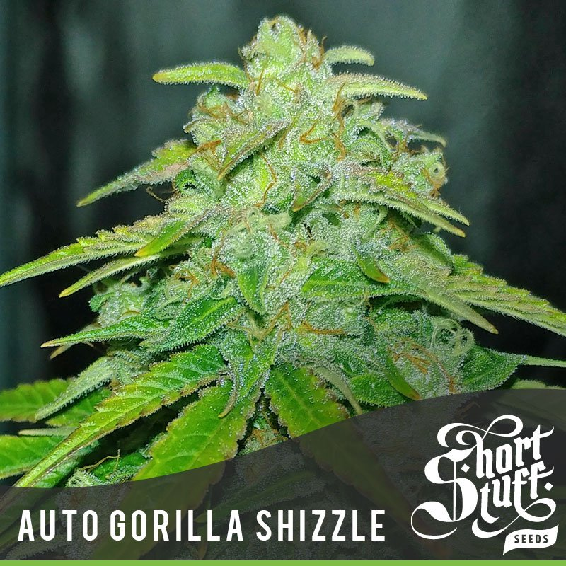 Auto Gorilla Shizzle - Short Stuff Seeds