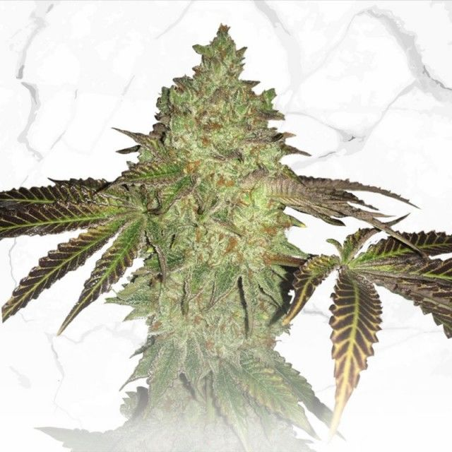 Stupendous Birthday Cake X Birthday Cake By Th Seeds From Seed City Funny Birthday Cards Online Fluifree Goldxyz