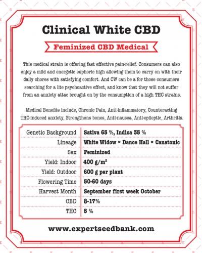 临床白色CBD  -  Expert Seeds