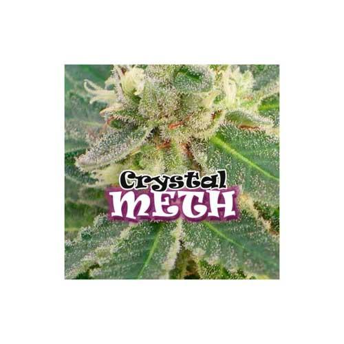 קריסטל METH - Dr Underground