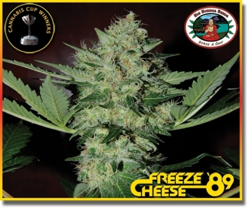 Freeze Cheese '89 - Big Buddha Seeds