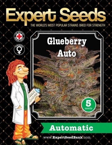 Glueberry Auto - Expert Seeds