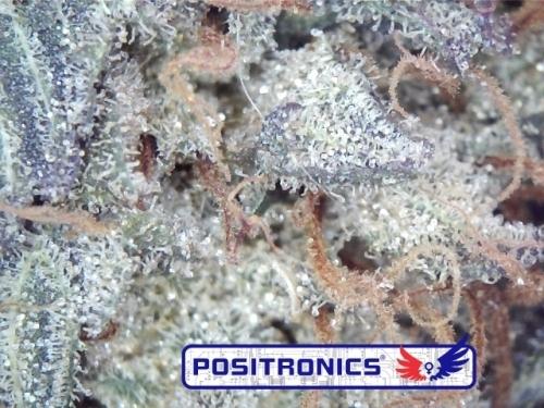 戈多大师库什 -  Positronic Seeds