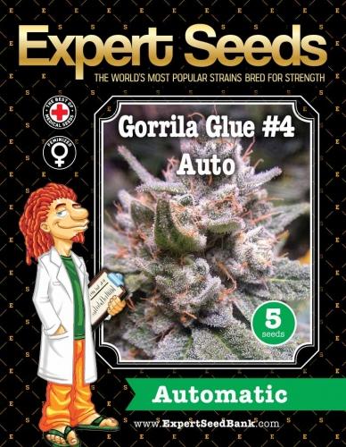 גורילה דבק #4 Auto - Original Sensible Seeds