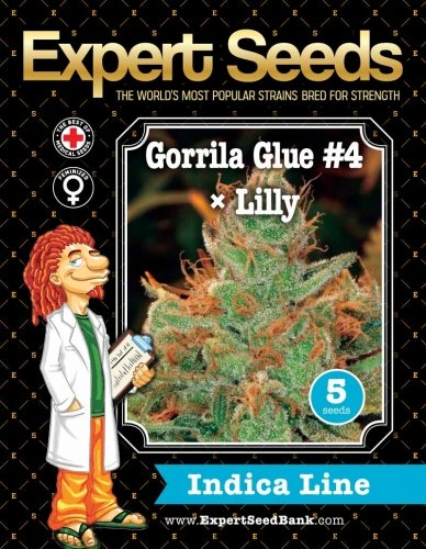 Colla Gorilla #4 × Lilly - Expert Seeds
