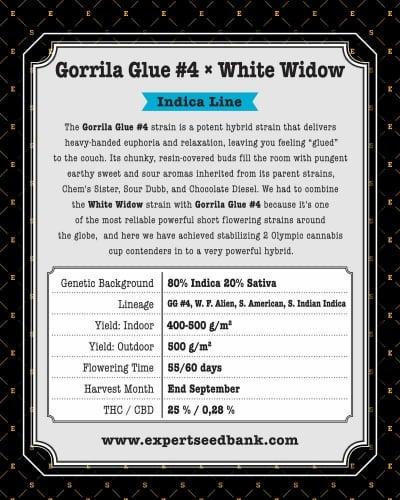 Gorilio klijai #4 x balta našlė - Expert Seeds