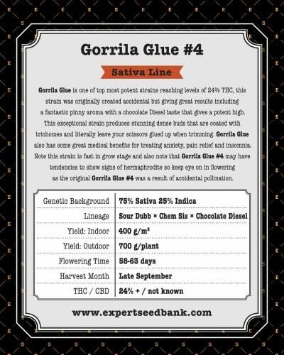 גורילה דבק # 4 - Expert Seeds