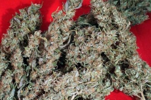 חואניטה לה לגרימוזה - Reggae Seeds
