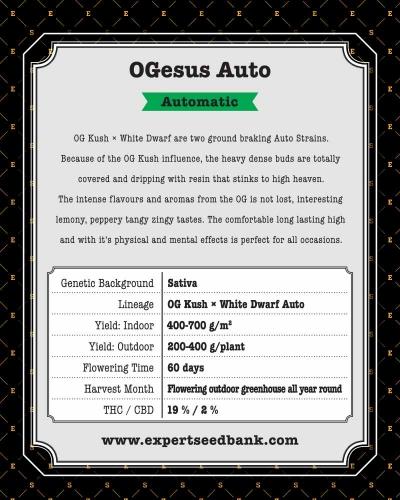 OGesus אוטומטי - Expert Seeds