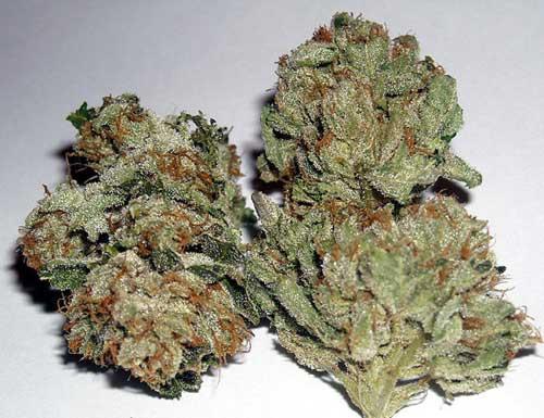Rug Burn OG  -  Rare Dankness Seeds