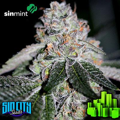 sinmint cookies   sin city seeds   seed city   best