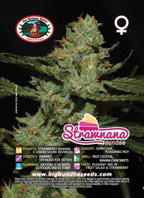 Strawnana圣代 -  Big Buddha Seeds
