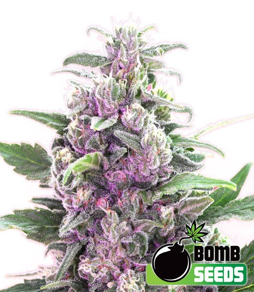 THC бомба - бомба Семена