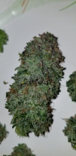 蓝莓汽车 -  Baked Beans Cannabis Seeds