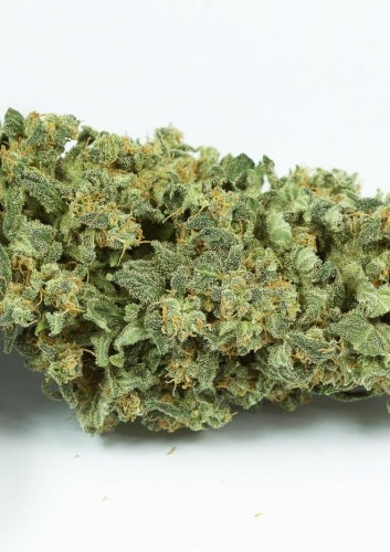 Haze 2.0 Autoflowering - Dinafem Seeds