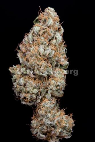 Haze Autoflowering CBD  -  Dinafem Seeds