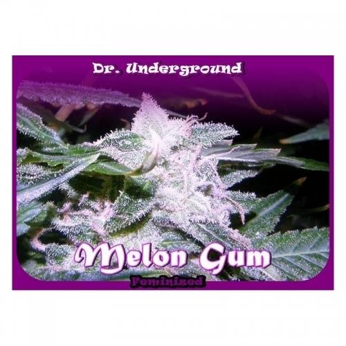 甜瓜口香糖 -  Dr Underground