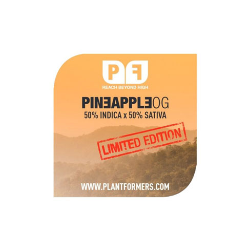 菠萝OG  -  Plantformers
