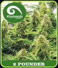 SATILIK - 2 Pounder'ın - Kivi Tohumlar-Kivi tohumları