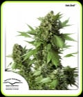 Auto-Ente-Dutch Passion Seeds