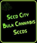 Auto OG Kush-Seed City Bulk Cannabis Seeds