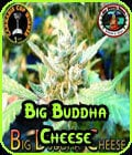 Big Buddha Cheese-Big Buddha Seeds