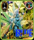Blue Cheese-Big Buddha Seeds