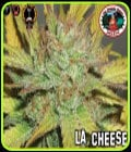 LA Cheese-Big Buddha Seeds