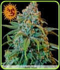 SALE - Liberty Haze-Barneys Farm Seeds