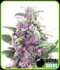 THC bomba