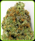 Wipeout Express Auto-Heavyweight Seeds