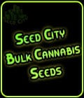 + Gold-Seed City Bulk Cannabis Seeds