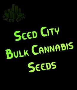 加利福尼亚州奥兰治 - 市种子大麻散装种子