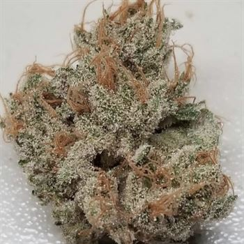 Tropicanna Kush- Oni Seed Co