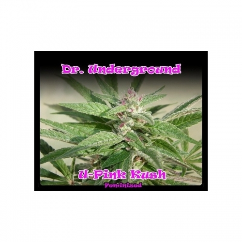 U-Pink Kush  -  Dr Underground
