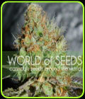 SALE - Afghan Kush Special - World of Seeds - Cannabis Seed Sale Items