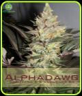 Alphadawg - Alphakronik Genes