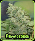 Armageddon - Homegrown Fantaseeds