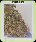 Blimburn America - Sour Diesel - BlimBurn Seeds