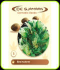 Brainstorm - De Sjamaan Seeds