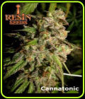 Cannatonic - Resin Seeds
