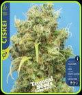 Ciskei - Tropical Seeds