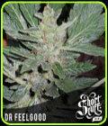 Dr Feelgood - Short Stuff Seeds