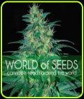 South African Kwazulu - World of Seeds