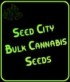 Auto Big Bud - Seed City Bulk Cannabis Seeds