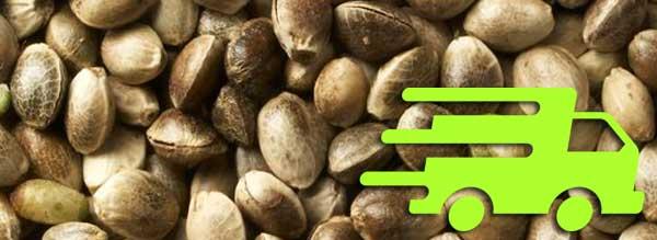 קנה קנאביס זרעים באינטרנט עם משלוח מהיר
