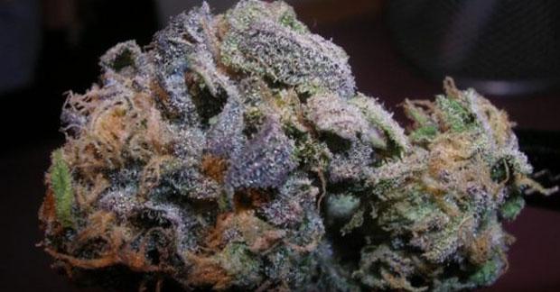 女性紫色Urkle