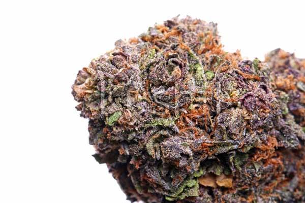 祖父紫色种子