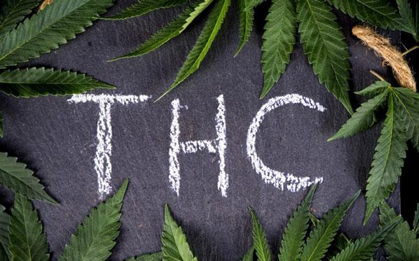 זרעי THC גבוהים